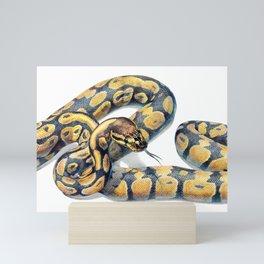 Boa Portrait Mini Art Print
