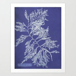 Cystoseira Triticoides Art Print