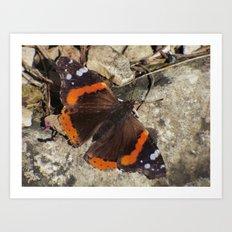 butterfly 2016 Art Print