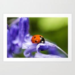 Ladybird on Bluebell Art Print