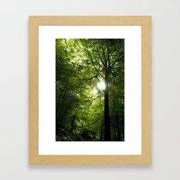 Sunshine through the trees. Framed Art Print