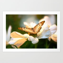Butterfly Colllecting Nectar Art Print