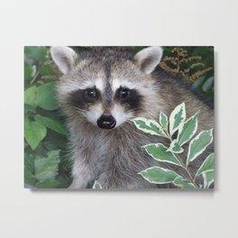 Baby Raccoon Photo Metal Print