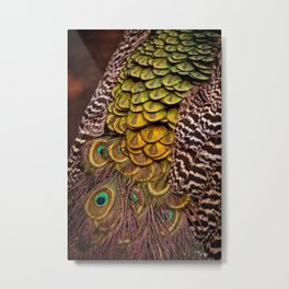 Peacock Tail Feathers Metal Print