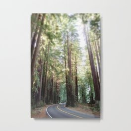 Redwood Trees and the Highway Metal Print