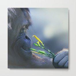 Orangutan Eating Fresh Flowers Metal Print