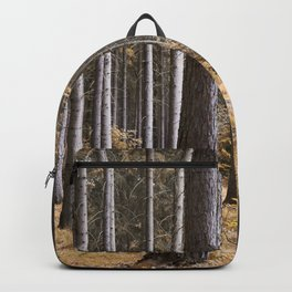 Into the pine forest we went Backpack