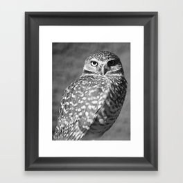 ELF OWL (2) Framed Art Print