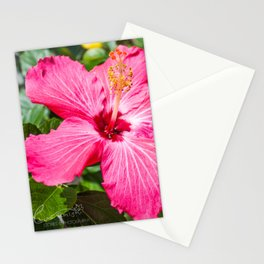 Dime, Dame Stationery Cards