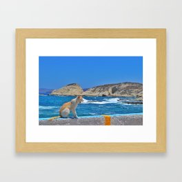 Cats of the Cyclades  Framed Art Print