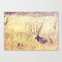 coyote Canvas Prints featuring Coyote  by Shelby Babbert Photography