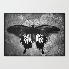 Butterfly#1  Canvas Print