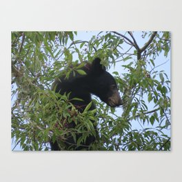 Bearly-Contained Excitement Canvas Print