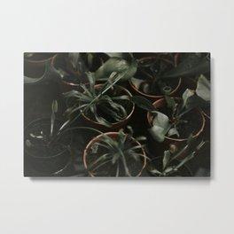 Potted Cactus Metal Print