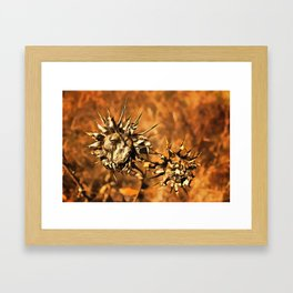 Dried Suns Framed Art Print