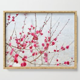 Beautiful Cherry Blossoms at the Imperial Palace in Kyoto, Japan Serving Tray