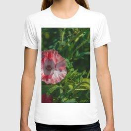 R&W T-shirt