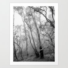 My view of Twenty Four April - New England National Park Art Print
