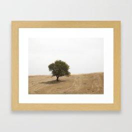 The solitary holm oak Framed Art Print