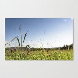 Summer grass Canvas Print