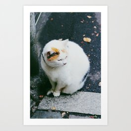 Cat like Snow Art Print