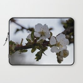 Cherry blossoms on cherry branch Laptop Sleeve