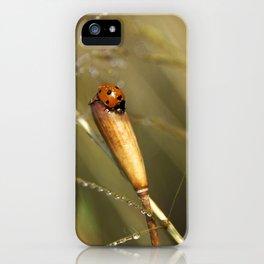 Morning Dew On Lady Bird iPhone Case