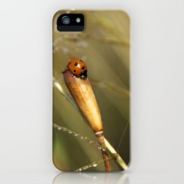Morning Dew On Lady Bird iPhone Case