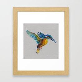 Kingfisher 7 Framed Art Print