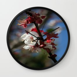 Sunlight Embracing Apricot Blossom Wall Clock