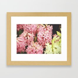 Hyacinth Framed Art Print
