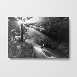 Dog in morning sunlight Metal Print