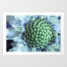Beautiful but dangerous - Cephalaria Dipsacoides Art Print