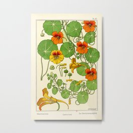 French botanical flower plate - Maurice Verneuil - Capucine Metal Print