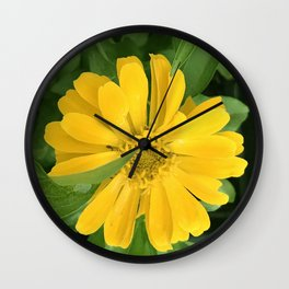 Lucious Yellow Zinnia Flower With Lush Leaves Wall Clock