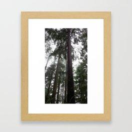(#36) Tall Wet Evergreens Framed Art Print