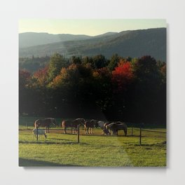 Draft Horses in Vermont Foliage Metal Print