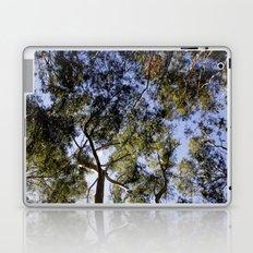 Eucalyptus Tree Canopy Laptop & iPad Skin