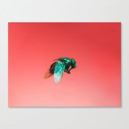 Bugged #06 Canvas Print