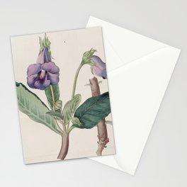 Flower 1127 gloxinia caulescens Miller s Pernambuco Gloxinia13 Stationery Cards