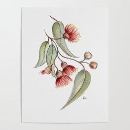 Flowering Australian Gum Poster