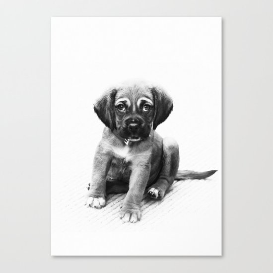 Little dog Canvas Print