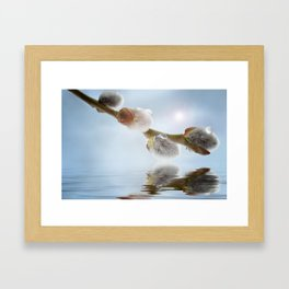 Pussy willow 0117 Framed Art Print