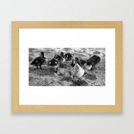 duck duck Framed Art Print