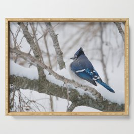 Winter's Cold (American Blue Jay) Serving Tray