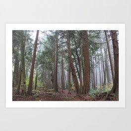 Woodland in White Rock Art Print
