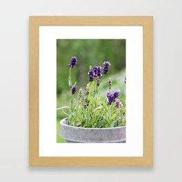Lavender flower in tin pot Framed Art Print
