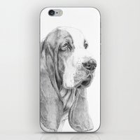 the hound iPhone & iPod Skins featuring Basset hound by Doggyshop