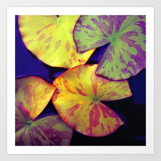 lily pads IIX Art Print