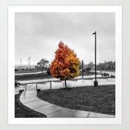Fall Colors - Fall Foliage Photo Art Print